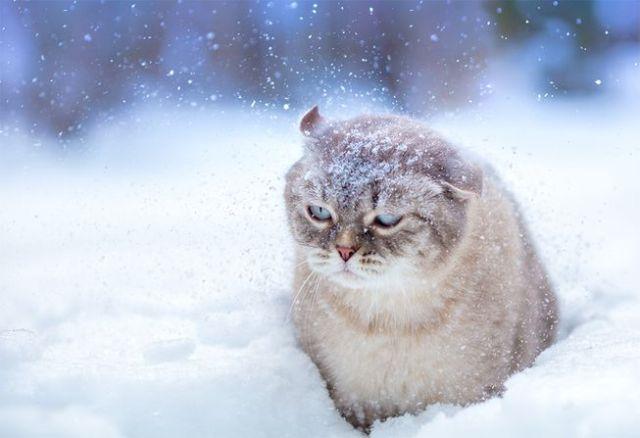 cat-snow.png.653x0_q80_crop-smart