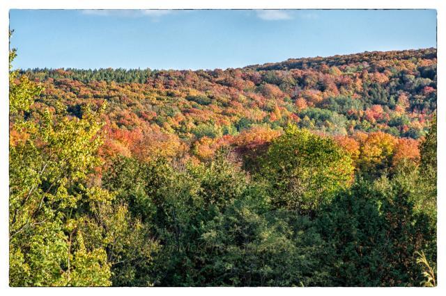 fall colour 1