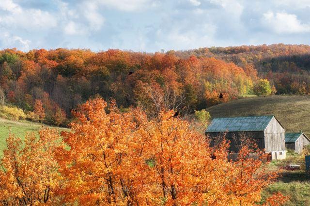 fall colour 2