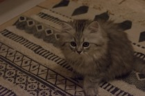 kitty1