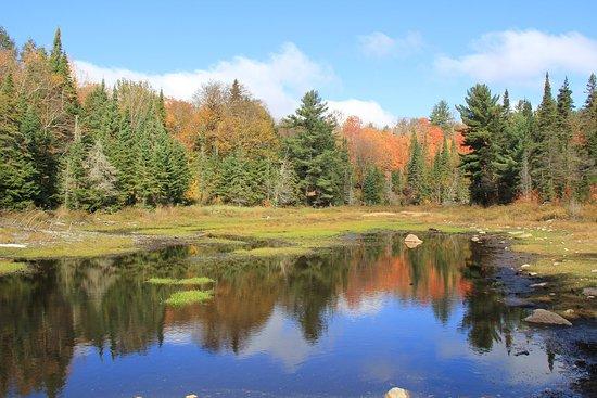 the-fall-colours