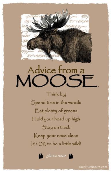advicemoose